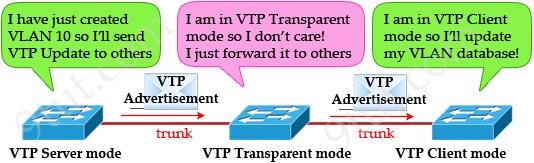 VTP_Transparent_Client_Modes.jpg